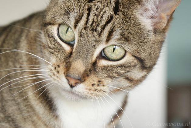 immuunsysteem versterken kat